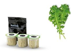 Sementes de Couve Kale Curled Green BOSCH MSGZS016 (3-5 semanas)