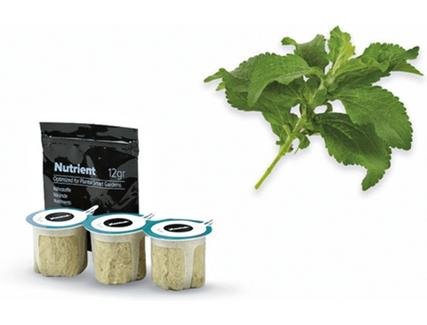 Sementes de Stevia BOSCH MSGZH022