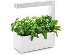 Vaso Autoirrigável TREGREN Herbie Indoor Branco (Interior)